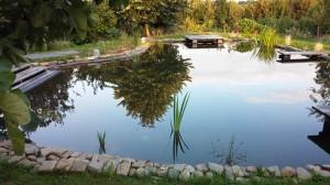 La piscine écolo avec ses plantes pour purifier l'eau naturellement